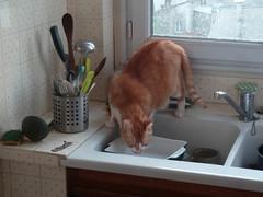 le point d'eau (jili'm **) Tags: kitchen cat sink notmycat