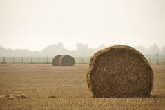 Moisson (garpar) Tags: nikon brie agriculture campagne iledefrance champ paille moisson seineetmarne d90 agricole roundballer garpar paysdecoulommiers