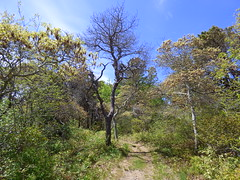 Head of the Meadow, Forest (mahler9) Tags: forest capecod massachusetts truro jaym headofthemeadow mahler9 andantecomodofotos