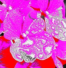 DSC_0007 (pratesip) Tags: fiori piante petali pioggia