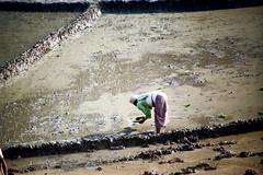 21-671 (ndpa / s. lundeen, archivist) Tags: nepal people woman color film water field rural 35mm 21 farm nick working farmland worker nepalese ricepaddies 1970s 1972 himalayas ricepaddy nepali dewolf localpeople nickdewolf localwoman photographbynickdewolf ruralnepal reel21 hillyregion