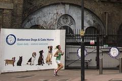 Dog & Jog (Michael Goldrei (microsketch)) Tags: street rescue woman dog cats london home dogs st female cat photography photo photographer photos 14 evolution running run shelter jogging battersea jog evolve 2014