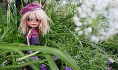 In the Dandelion field