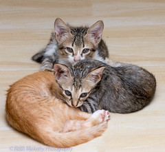 Kittens - 3 (Keith Mulcahy) Tags: philippines kittens keithmulcahy july2014 blackcygnusphotography ppa7a0 ppd56c