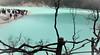 DSC_0157 (ajinurvita) Tags: bandung alam danau wisata kawahputih belerang