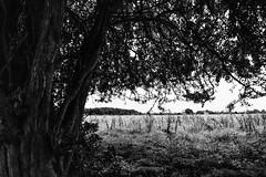 Hob Moor, Shelter (Rawturnip) Tags: hobmoor