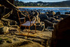 Take a seat, Forresters Beach (#JAM Photography) Tags: beach forresters