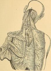 Anglų lietuvių žodynas. Žodis circumflex scapular artery reiškia circumflexus mentikaulio arterijų lietuviškai.