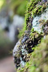 Moss. (|SNAPShots| by: Patrick J.Whitfield) Tags: camera trees summer sky plants sun mist lake ontario canada mountains macro green slr nature wet water beautiful grass clouds creek canon river garden outdoors photography eos rebel landscapes waterfall moss spring woods backyard scenery rocks village mud quebec hiking path wildlife exploring ottawa peaceful lookout creepy hills adventure growth trail dew valley swamp views gatineau marsh benches forests mothernature breathtaking middleofnowhere upcloseandpersonal t3i greatescape onewithnature clearbluesky gettindirty iphone5 follow4follow like4like