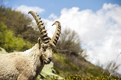 Mountain Goat (Kobi W.) Tags: ocean park street new old city uk trip travel family flowers autumn trees winter light sunset red sea summer vacation portrait england sky people urban bw food sun white lake holiday snow chicago black paris france color berlin green london art fall love beach nature water car birds animals bike yellow rock architecture kids night clouds canon river garden landscape fun photography scotland photo spring europe day photos live blackandwhiteblue
