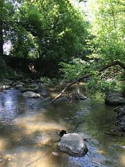 Hawksbury Creek third sample site[3]