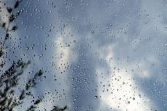 Perles de pluie (bernarddelefosse) Tags: eau pluie