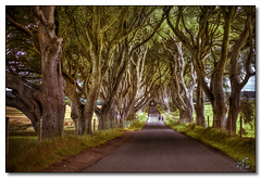 The Dark Hedges (rjt208) Tags: trees ireland countryside wildlife scenic walkway golfcourse fields northernireland beech pathway ballymoney countyantrim gameofthrones darkhedges rjt208