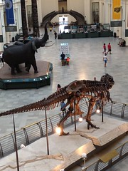 (-mirandak) Tags: chicago fieldmuseum sue carlakeley