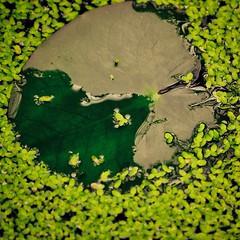 image (Eva O'Brien) Tags: park chicago nature animals zoo nikon wildlife animalrescue lincolnparkzoo lincolnpark zooanimals zooanimal d3100 nikond3100 evacares evaobrien