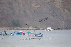 Puerto Lopez, Ecuador (ARNAUD_Z_VOYAGE) Tags: ocean park street city sea people white house fish man black beach colors birds clouds america port landscape puerto bay coast boat town ecuador jump fishing pacific pentax south watching national fisher whales activity lopez kx arched machalilla
