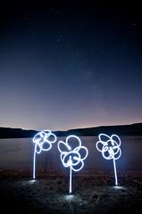 Light Flowers (little ju !) Tags: light lightpainting france flower beach night stars jura littleju