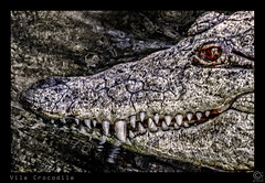 Vile Crocodile (FotoGrazio) Tags: red wild painterly eye art texture nature water smile monster zoo scary dangerous beige dragon reptile sinister mixedmedia jaw wildlife teeth wayne evil surreal hide filter rows scales crocodile bloody forge vicious vile deadly manilazoo grazio fotograzio