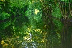 Cut Trees (Nanny Bean) Tags: trees reflections boroughbridge cutriver nikond600 uresycamoresash