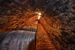 700 Years Old (jan lyall) Tags: travel 2 holiday hungary wine winecellar barrells villany ancientwinecellar villanyhungary brickwinecellar mayerpincevillany