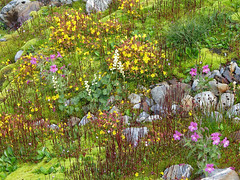 Moss and Flower Gardens (Mike Dole) Tags: wildflowers washingtonstate olympicnationalpark honeymoonmeadows mountanderson westforkdosewallipsriver