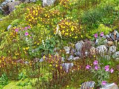 Moss and Flower Gardens (Mike Dole) Tags: wildflowers washingtonstate olympicnationalpark honeymoonmeadows mountanderson westforkdosewallipsriver