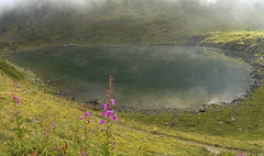 001 - il lago di Chamolé (TFRARUG) Tags: alps alpine alpi beccadinona emilius