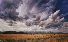 Grand Teton Wyoming Buffalo (The Dark Side Observatory) Tags: park wild summer sky mountains west grass clouds buffalo colorful grand september national wyoming wilderness teton bison grassland 2014 grandtetonnationalpark tomwildoner