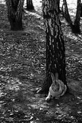 Find me (Daniel Kulinski) Tags: autumn shadow sun rabbit photography warm europe day image daniel creative picture samsung poland hide warsaw 60mm 1977 find photograhy ossa nx kulinski nx20 samsungnx samsungimaging dvoivodeship danielkulinski samsungnx60mmf28 samsungnx20