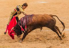 Toros (alvarosánchezizquierdo) Tags: valencia sergio spain bulls toros utiel galán