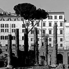 Largo di Torre argentina, Roma (pom.angers) Tags: panasonicdmctz30 ancientrome february europeanunion largoargentina rome roma lazio italia italy 2017 100
