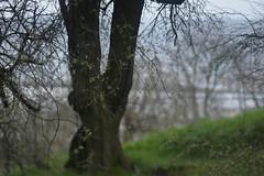 Overlook Park (Tony Pulokas) Tags: overlookpark portland oregon spring rain tree flower tilt blur bokeh willametteriver railyard unionpacific
