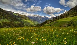 Beautiful spring...