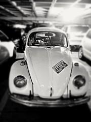 (Aaron Montilla) Tags: aaronmontilla 2017 blackandwhite classiccars volkswagen beatle dof streetphoto parkingarea documentaryphoto conceptual autosclasicos carrodelpueblo escarabajo pdc fotodecalle fotografiadocumental estacionamientos blancoynegro bw byn bokeh 2016