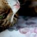 Pio. (Phlora) Tags: cat natura view macromondays