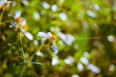 2014052514-1 (window lightroom ) Tags: landscape photography photo snapshot memory macau   macao  em1    1240    olympusem1 olympusmzuikoed1240mmf28pro