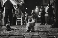 are u human (anilaydn) Tags: street black animal night cat turkey 50mm popular izmir karyaka canon600d