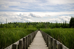 Long Road to Ruin (flashfix) Tags: wood blue trees sky cloud white ontario canada green nature lines reeds landscape vanishingpoint nikon orleans ottawa boardwalk 40mm dramaticsky mothernature 2014 leadinglines landscapephotography merbleue d7000 nikond7000 2014inphotos june182014