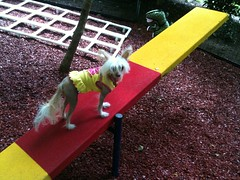 """LuLu On The See-Saw • <a style=""""font-size:0.8em;"""" href=""""http://www.flickr.com/photos/96196263@N07/14367771378/"""" target=""""_blank"""">View on Flickr</a>"""