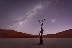 Deadvlei Twilight (TheFella) Tags: africa park travel trees sunset sky tree slr nature night digital photoshop stars landscape dead skeleton photography star photo nationalpark twilight sand nikon nightscape desert natural dusk african space dunes astro nighttime clay photograph astrophotography processing marsh pan nightsky dslr namibia constellations cosmos acacia cracked sanddunes constellation deadend d800 milkyway namibian sossusvlei namib desiccated saltpan southernafrica deadvlei postprocessing starscape travelphotography camelthorn subsaharan claypan tsauchab namibnaukluft tsauchabriver acaciaerioloba thefella starphotography conormacneill republicofnamibia republiknamibia republiekvannamibië thefellaphotography vachelliaerioloba