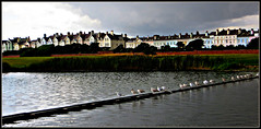 Waterloo, Liverpool - Marine Crescent before the downpour..... (ronramstew) Tags: uk england sky seagulls rain birds clouds liverpool waterloo merseyside marinecrescent