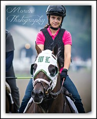 Lukas Trainee (EASY GOER) Tags: summer horses horse ny newyork sports racetrack race canon athletics track photos saratoga competition upstate running racing historic event 7d athletes races sporting spa thoroughbred equine thoroughbreds compete sportofkings