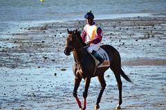 (...Away...) Tags: summer people beach animals mirror sand sanlucardebarrameda horsesracing