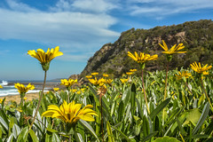 Golden winters day (www.mjbrownphotography.com) Tags: ocean sea flower colour beach water beaches