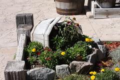 Mormon Station State Historical Park - Genoa Nevada U.S.A. (Gerald (Wayne) Prout) Tags: usa canon nevada genoa flowergarden canoneos40d mormonstation stateofnevada mormonstationstatehistoricalpark