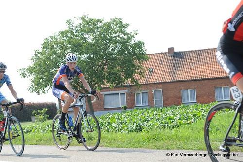 Geel Oosterlo  (179)