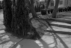 Hedgelines