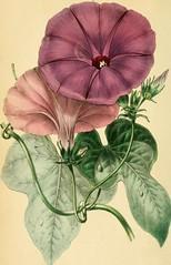Anglų lietuvių žodynas. Žodis lobed leaf reiškia lobed lapų lietuviškai.