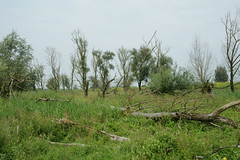 DSC06377 (Ton Smilde) Tags: oostvaardersplassen naturereserveinthenetherlands