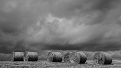 Rolling storm (Tommy Hyland) Tags: bw food white storm black nature barley weather clouds dark circle season photo corn farm farming harvest straw stormy nobody line crop roll agriculture heavy stormyweather blackandwhitephoto heavyclouds x100s